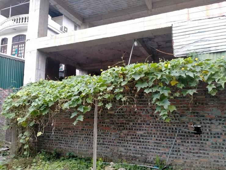 Bộ Tư pháp phát hiện sai phạm khó tin trong đấu giá tài sản ở Hà Nội